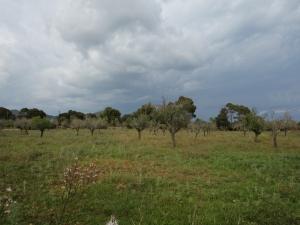 Terreno edificable en venta en Sa Coma