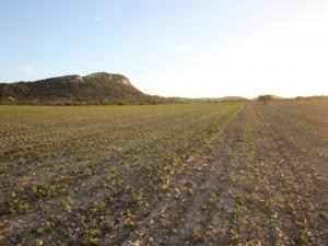 Terreno Edificable entre Sineu y Petra