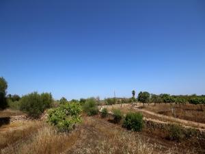 Terreno cerca de Son Carrió
