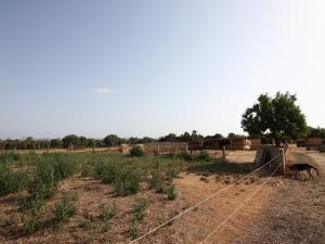 Finca edificable cerca de la playa de Cala Mandia