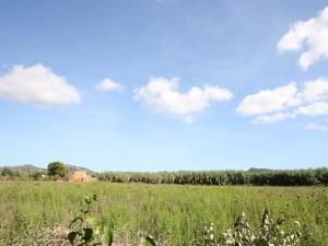 Tereno edificable en Manacor en zona tranquila