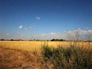 Terreno rústico edificable de 34660 m2 en zona muy tranquila a 5 minutos de Ses Covetes y Sa Rápita.