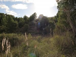 Terreno rustico cerca de Son Macia