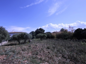 Se vende solar urbano en Cala Millor