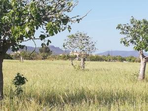 TERRENO DE 21.000 M2 CON VISTAS A LO LEJOS AL MAR Y MONTAÑAS