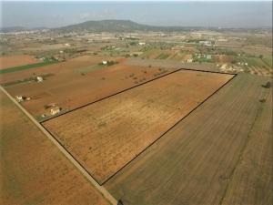 Terreno en venta entre Vilafranca y Felanitx