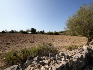 Se vende terreno en Sant Llorenç