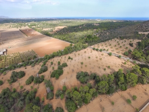 Se vende terreno edificable en Manacor