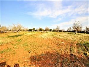 Se vende terreno edificable entre San Lorenzo y Arta.