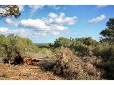 Purchase Sale Land en Porto Colom