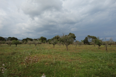 Compra Venta Terrenos en Sa Coma