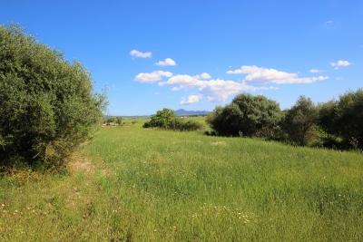 Venta Terrenos Vilafranca de Bonany