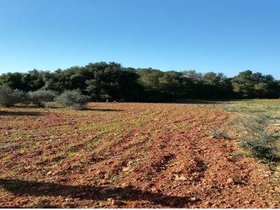 Compra Venta Terrenos en Campos
