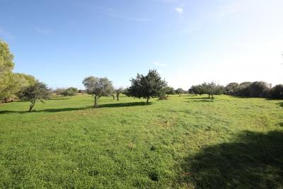 Terreno  edificable en Cala Murada