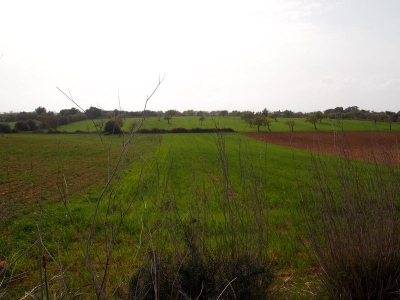 Venta Terrenos Manacor