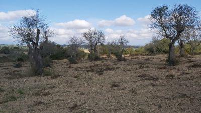 Venta Terrenos Petra