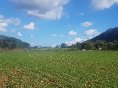 Venta Terrenos Alcudia