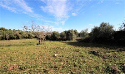 Venta Terrenos Calas de Mallorca